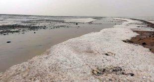 تونس: تدمير ممنج للبيئة