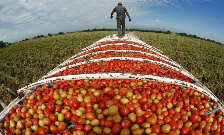 صورة الجزائر: رهن السيادة الغذائية وتنمية أرباح كبار المستثمرين الرأسماليين