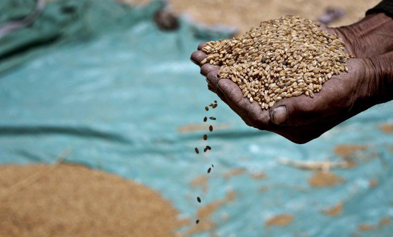 صورة دراسة:السيادة على الغذاء: الأرض لمن يفلحها ومزارعو الوطن يجب أن ينتجوا معظم الغذاء المُسْتَهْلَك محليا
